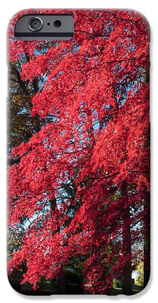 Red Leaf Digital Art iPhone Cases - Red Leaves in Autumn iPhone Case by Bill Cannon