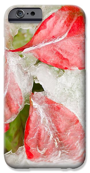 Winter Storm iPhone Cases - Red Leaves in Ice  iPhone Case by Cora Rosenhaft