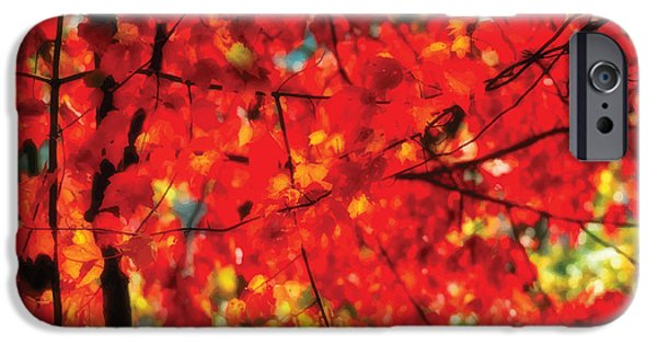 Forest iPhone Cases - Red Leaves iPhone Case by Melinda Dreyer