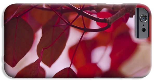 Ruby Garden Jewel iPhone Cases - Red Leaves iPhone Case by Sharon Mau