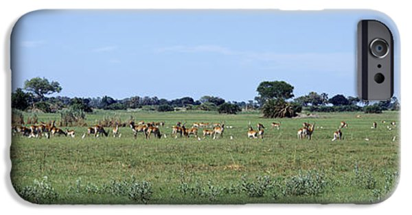 Field. Cloud iPhone Cases - Red Lechwee Moremi Game Reserve iPhone Case by Panoramic Images
