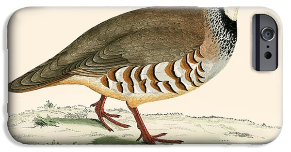 Hunting Bird iPhone Cases - Red Legged Partridge iPhone Case by Beverley R. Morris