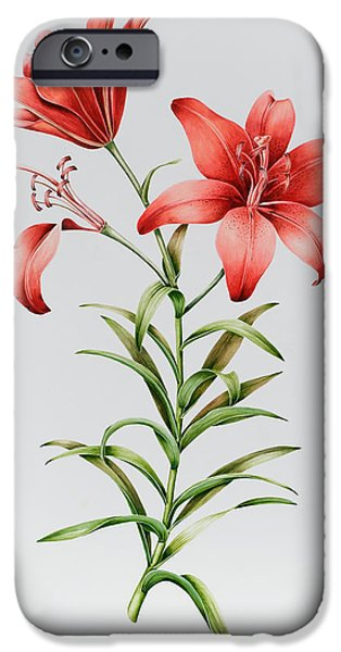 Lilies iPhone Cases - Red Lilies iPhone Case by Sally Crosthwaite