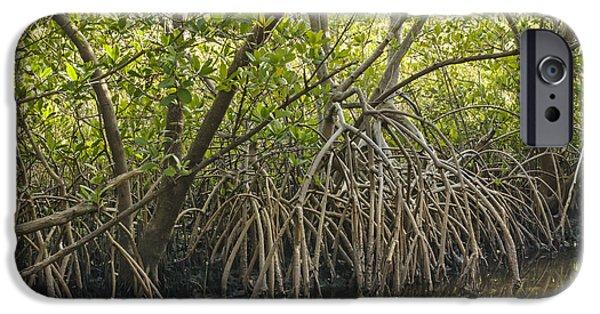 Rhizophora Mangle iPhone Cases - Red Mangrove Rhizophora mangle iPhone Case by John Arnaldi