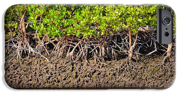 Red Mangroves iPhone Cases - Red Mangroves iPhone Case by David Lee Thompson