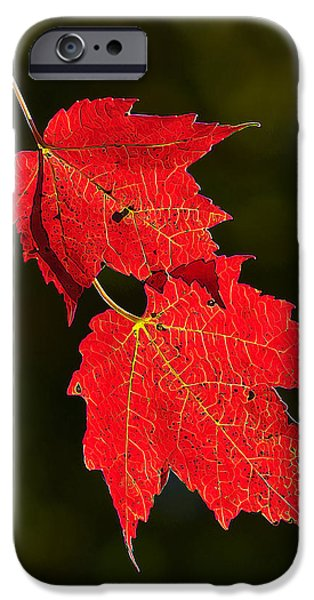 Downeast iPhone Cases - Red Maple in Fall iPhone Case by Bill Caldwell -        ABeautifulSky Photography