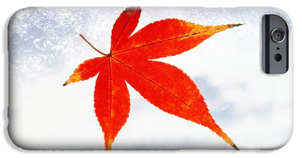 Cut-outs iPhone Cases - Red Maple Leaf Against White Background iPhone Case by Panoramic Images