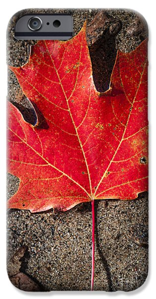Maple Season iPhone Cases - Red maple leaf in water iPhone Case by Elena Elisseeva