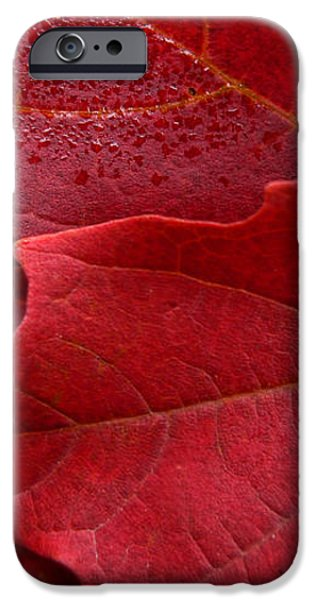 Red Maple Leaves iPhone Case by Jennie Marie Schell