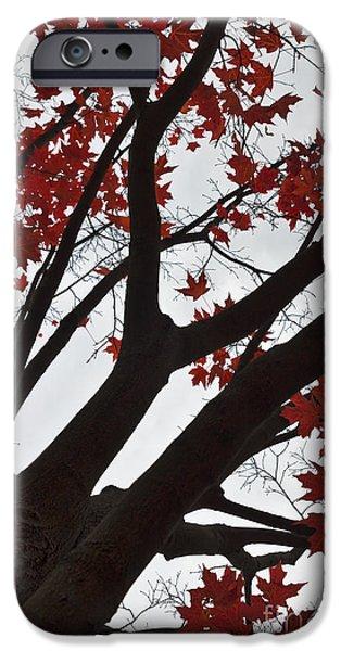 Maple Season iPhone Cases - Red Maple Tree iPhone Case by Ana V  Ramirez