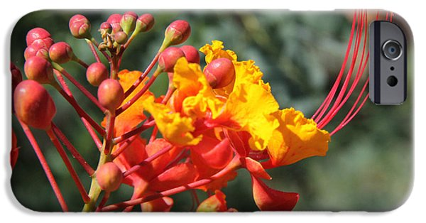 Yellow Bird Of Paradise iPhone Cases - Red Mexican BOP iPhone Case by Paul Anderson