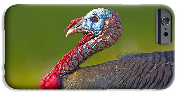 Best Sellers -  - Eastern Wild Turkey iPhone Cases - Red Neck iPhone Case by Jack Milchanowski