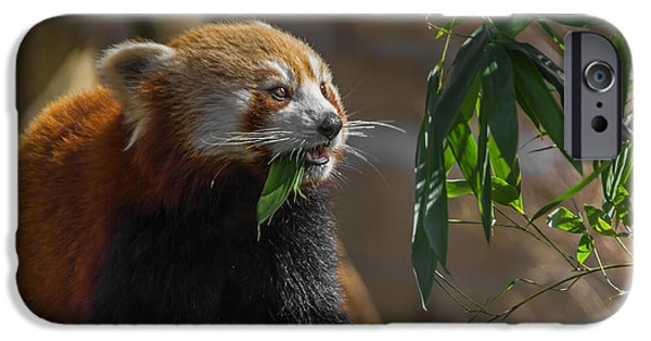 Fletcher iPhone Cases - Red Panda Cafeteria iPhone Case by Chris Fletcher