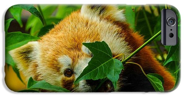 Wild Animals Pyrography iPhone Cases - Red Panda iPhone Case by Dillon Travis