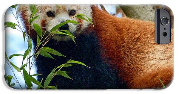 Red Panda iPhone Case by Trever Miller