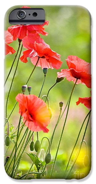 Red Poppies iPhone Case by FunCards