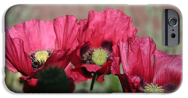 States iPhone Cases - Red Poppies IMG 8777 iPhone Case by Cindy Malota