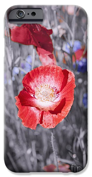 Selective Color iPhone Cases - Red poppy flower iPhone Case by Elena Elisseeva