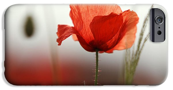 Blossom iPhone Cases - Red Poppy Flowers iPhone Case by Nailia Schwarz