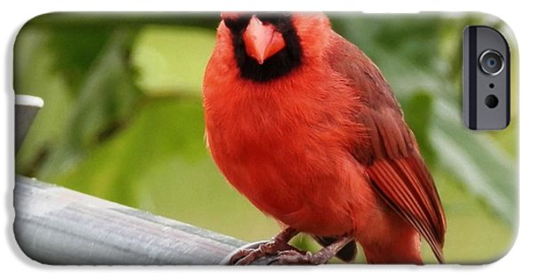 Cut-outs iPhone Cases - Red Red Cardinal iPhone Case by Belinda Lee