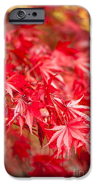 Red Red Red iPhone Case by Anne Gilbert