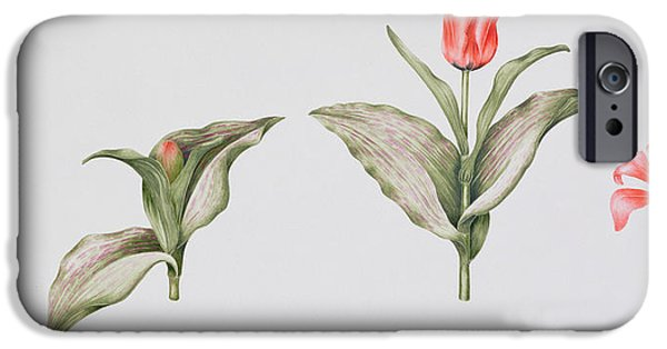 Botany iPhone Cases - Red Riding Hood iPhone Case by Sally Crosthwaite