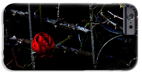 Rose Pyrography iPhone Cases - Red rose iPhone Case by Michael  Bjerg