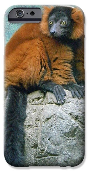 Smithsonian iPhone Cases - Red Ruffed Lemur iPhone Case by Emmy Marie Vickers