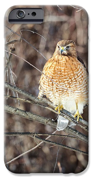 Hawk iPhone Cases - Red Shouldered Hawk Front View iPhone Case by Bill  Wakeley