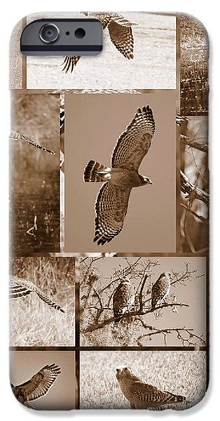 Red-Shouldered Hawk Poster - Sepia iPhone Case by Carol Groenen