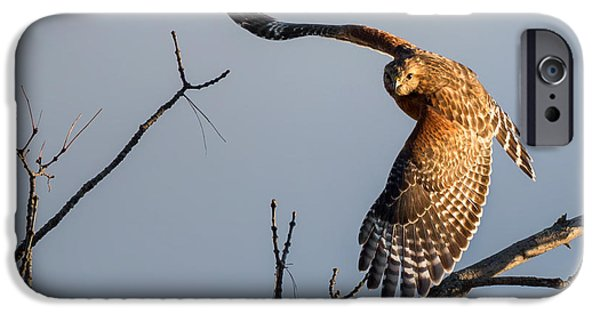 Spirit Hawk iPhone Cases - Red Shoulered Hawk in Flight iPhone Case by Bill  Wakeley