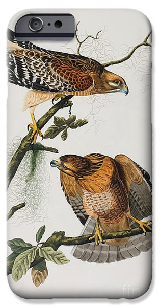 Wild Life Drawings iPhone Cases - Red Shoulered Hawk iPhone Case by Celestial Images
