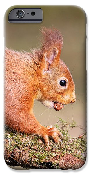 Bushy Tail iPhone Cases - Red Squirrel on log iPhone Case by Grant Glendinning