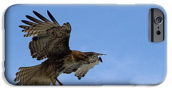 Bill Gallagher iPhone Cases - Red Tail Hawk iPhone Case by Bill Gallagher