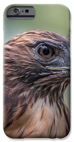 Red Tail Hawk iPhone Case by John Haldane