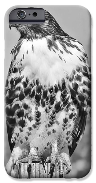 Red Tail Hawks iPhone Cases - Red Tail Hawk Youth Black and White iPhone Case by Jennie Marie Schell