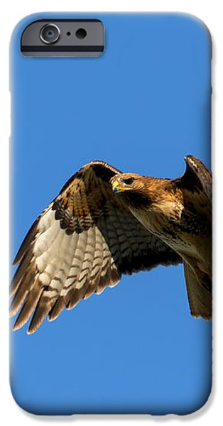 Red-Tail Hover iPhone Case by Mike  Dawson