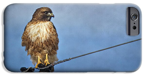 Red Tail Hawk Digital Art iPhone Cases - Red Tail on Watch iPhone Case by Priscilla Burgers