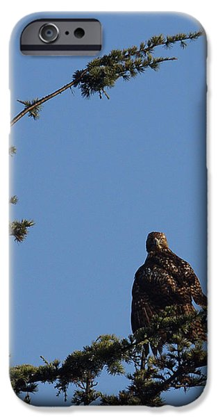 Redtail Hawk iPhone Cases - Red Tailed Hawk 2 iPhone Case by Ernie Echols