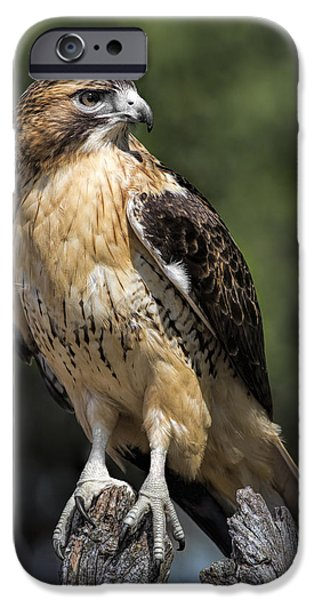 Hawk iPhone Cases - Red Tailed Hawk iPhone Case by Dale Kincaid