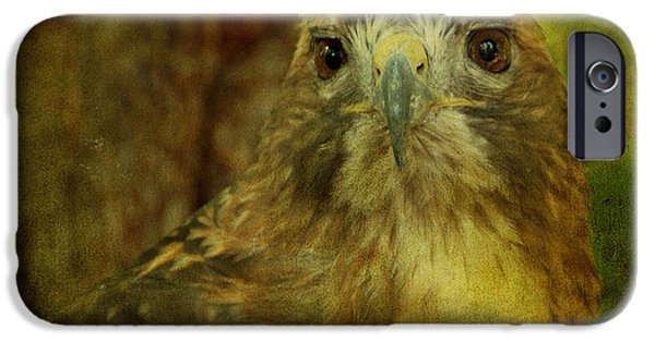 Hawk Art iPhone Cases - Red-tailed Hawk II iPhone Case by Sandy Keeton