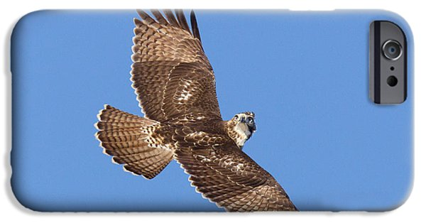 Us Wildllife iPhone Cases - Red-tailed Hawk iPhone Case by Jim Zipp
