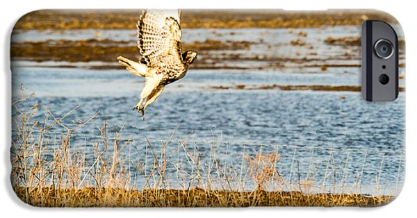 Membrane iPhone Cases - Red Tailed Hawk Launching into Flight iPhone Case by Douglas Barnett