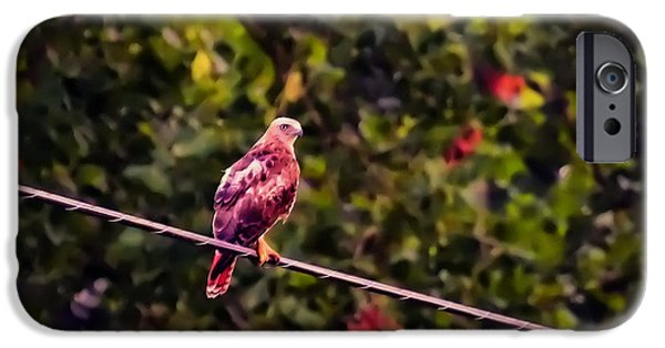Red Tail Hawk Digital Art iPhone Cases - Red Tailed Hawk On A Wire iPhone Case by Chris Flees