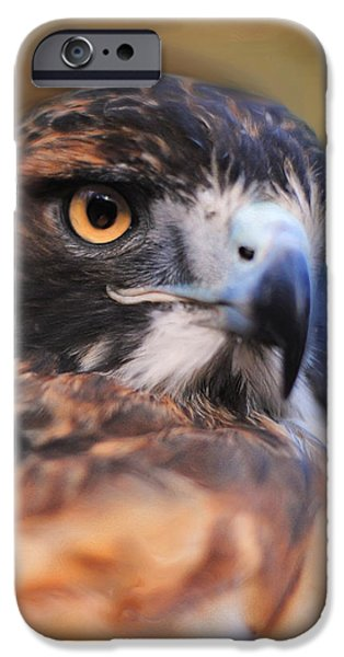 Hawk Art iPhone Cases - Red Tailed Hawk Portrait iPhone Case by Jai Johnson