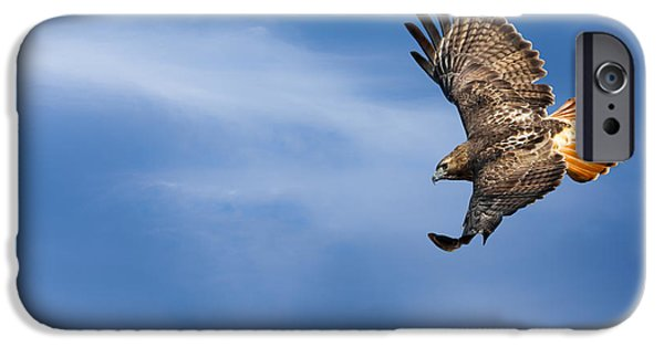 Red-tailed Hawk iPhone Cases - Red Tailed Hawk Soaring iPhone Case by Bill  Wakeley