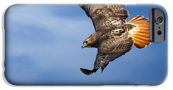 Red-tailed Hawk iPhone Cases - Red-Tailed Hawk Soaring Square iPhone Case by Bill  Wakeley