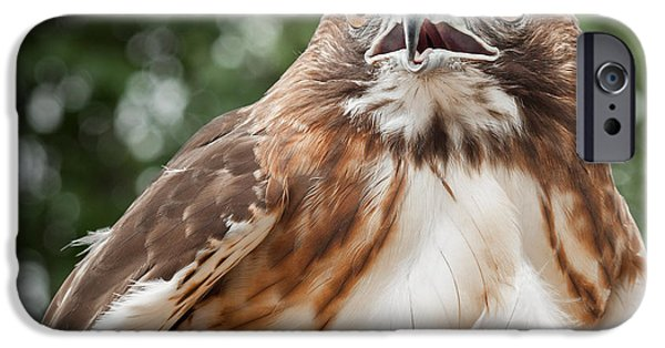Hawk iPhone Cases - Red-Tailed Hawk Square iPhone Case by Bill  Wakeley