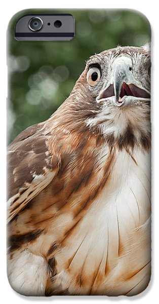 Red-Tailed Hawk Square iPhone Case by Bill  Wakeley