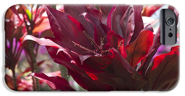 Rosen iPhone Cases - Red Ti - Cordyline terminalis - The Queen of Tropical Foliage iPhone Case by Sharon Mau